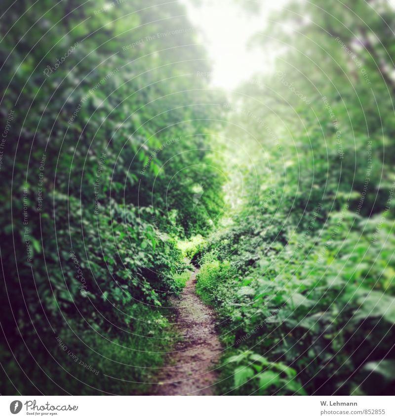 So ein langer geheimer Weg noch bis... Natur Pflanze grün Sommer Baum Tier Wald Luft Erde Wassertropfen Urelemente Regenwasser