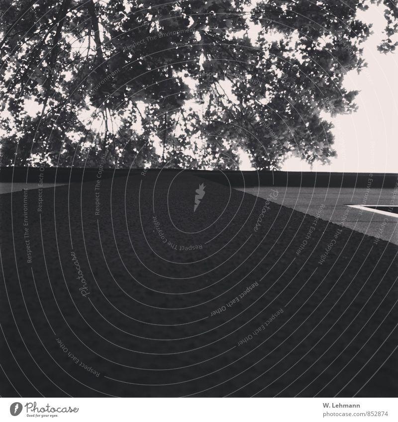 B/W Umwelt Natur Luft Himmel Sommer Baum Hilden Deutschland Stadt Stadtrand Haus Mauer Wand schwarz weiß Nordrhein-Westfalen Schwarzweißfoto Außenaufnahme