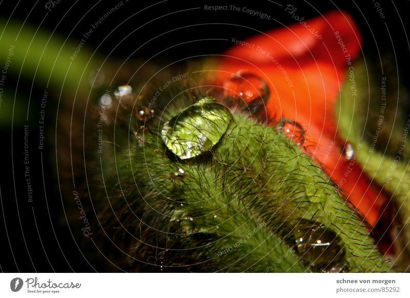 pralles leben III. Natur Wasser Blume Pflanze rot Tier gelb springen Blüte Frühling Haare & Frisuren orange Haut Wassertropfen Schutz Vergänglichkeit