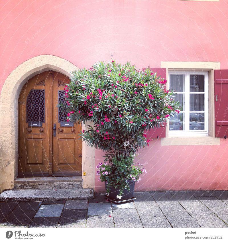 Häusliche Ansichten VIII Sommer Sträucher Blüte Grünpflanze Haus Historische Bauten Mauer Wand Fassade Fenster Tür Fensterladen Stein Holz Glas stehen