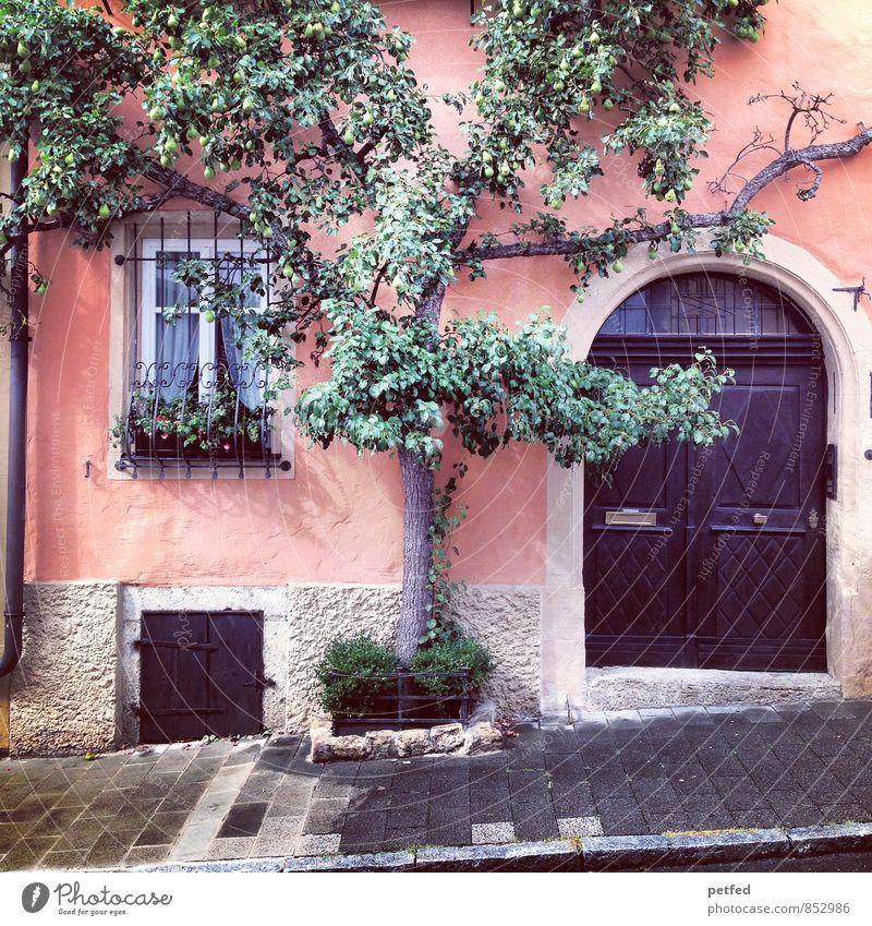 Häusliche Ansichten IX Pflanze Baum Kletterpflanzen Altstadt Haus Mauer Wand Fassade Fenster Tür Regenrinne Stein Beton Holz Glas Wachstum Häusliches Leben grau
