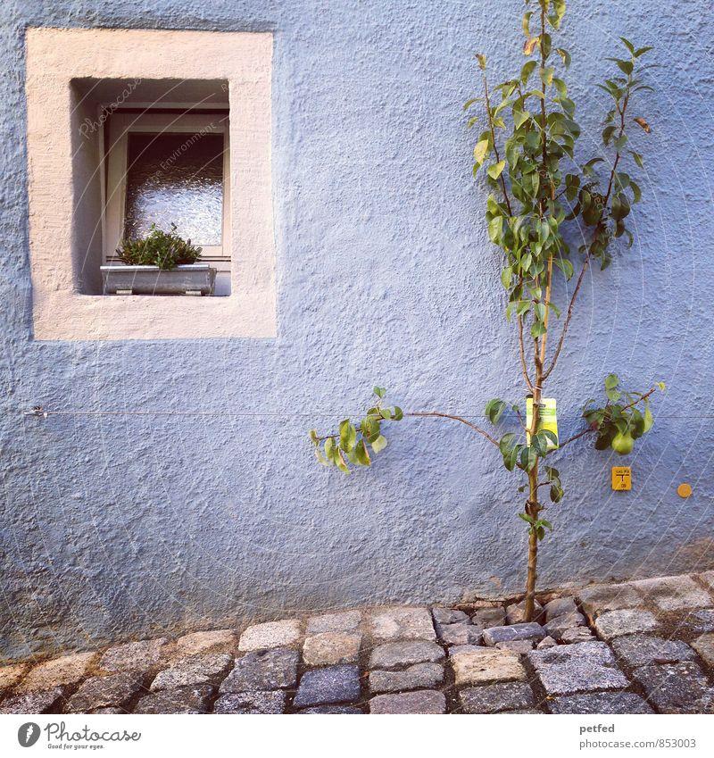Häusliche Ansichten X blau Pflanze grün weiß Sommer Baum Haus Umwelt Fenster Wand Mauer grau Stein Fassade Wachstum Häusliches Leben