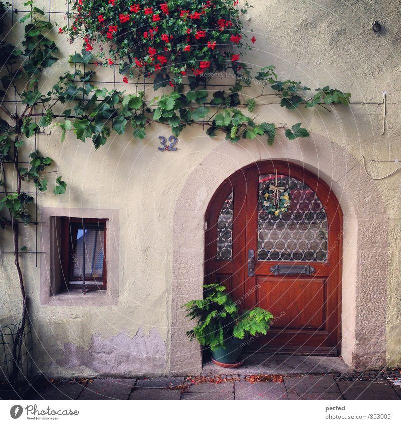 Häusliche Ansichten VII Pflanze Efeu Blüte Grünpflanze Haus Mauer Wand Fassade Fenster Tür Stein Holz Glas niedlich braun grün rot Geborgenheit Häusliches Leben