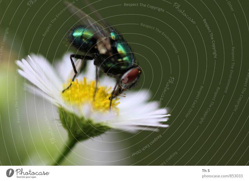 Fliege Natur Pflanze schön Sommer ruhig Tier Blüte Frühling natürlich Freiheit elegant Idylle Fliege authentisch ästhetisch Blühend
