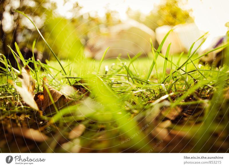 ins gras gebissen. Camping Umwelt Natur Landschaft Pflanze Urelemente Herbst Schönes Wetter Baum Gras Sträucher Blatt Garten Park Wiese natürlich grün Rasen