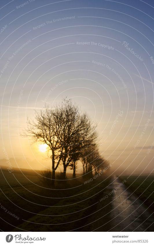 morning light HDR Licht Himmel kalt Nebel Trauer Verzweiflung Winter tree fog blue sky sun Sonne shadows Schatten Wege & Pfade road dri cold