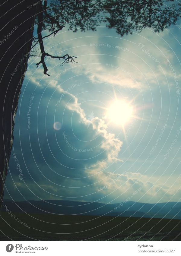 Sonnendurchbruch intensiv Licht blenden Färbung Lichtbrechung aufwachen Himmel wahrnehmen schön Baumstamm Gefühle Feld Landwirtschaft Wolken
