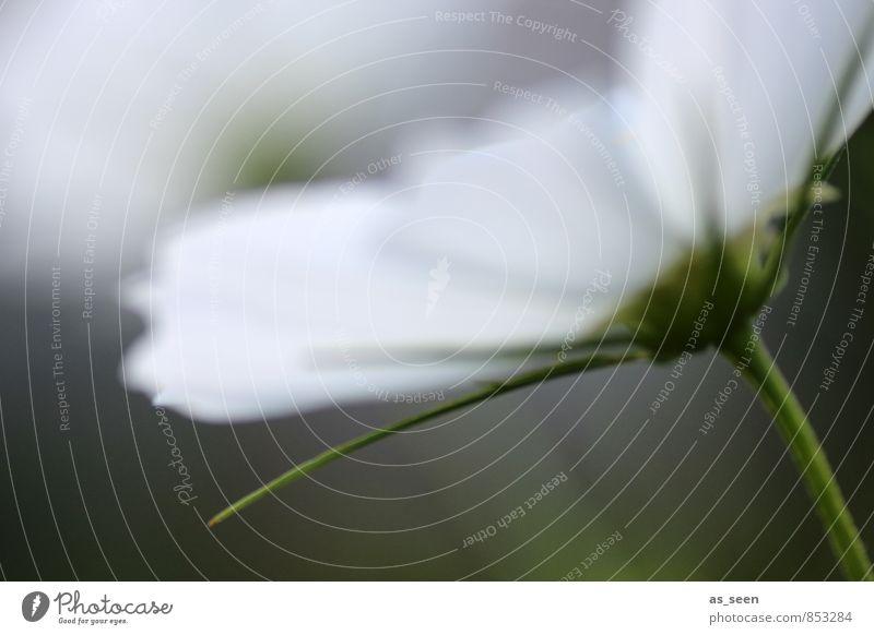 Blüte im Wind Natur Pflanze schön Erholung Blume ruhig Umwelt Wiese Garten Wachstum Zufriedenheit Design ästhetisch Blühend Wellness