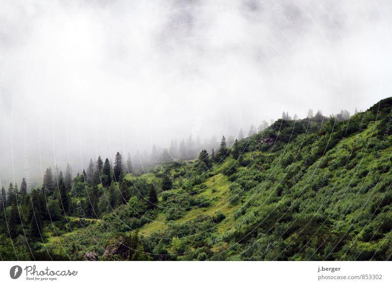 dampf ablassen Berge u. Gebirge wandern Natur Landschaft Pflanze Luft Wolken Sommer schlechtes Wetter Nebel Regen Wald Hügel Alpen gruselig nass grün weiß
