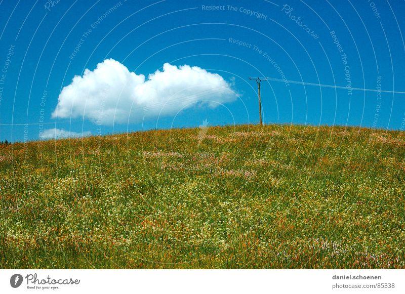 die Wolke schön Himmel Blume grün Sommer Wolken gelb Erholung Wiese Blüte Gras Frühling Hintergrundbild Wetter Pause Freizeit & Hobby