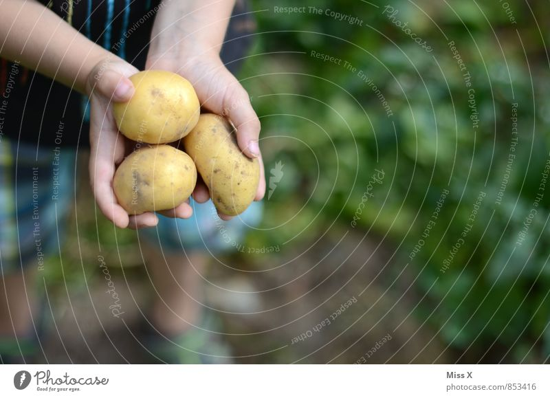 Die dümmsten Bauern ... ;-) Lebensmittel Gemüse Ernährung Bioprodukte Vegetarische Ernährung Gartenarbeit Mensch Kind Hand Finger 1 Herbst Pflanze Feld frisch