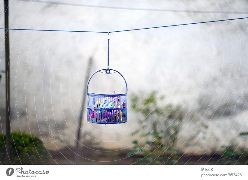 Im Körbchen Häusliches Leben Garten Bekleidung Schalen & Schüsseln Kasten hängen Stimmung fleißig Ordnungsliebe Reinlichkeit Sauberkeit Wäscheleine