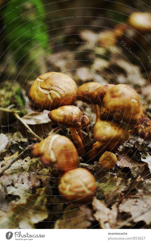 tarnung ist alles Umwelt Natur Erde Herbst Pflanze Sträucher Moos Wildpflanze Pilz Waldboden entdecken wandern Duft dünn authentisch einfach frisch kaputt klein