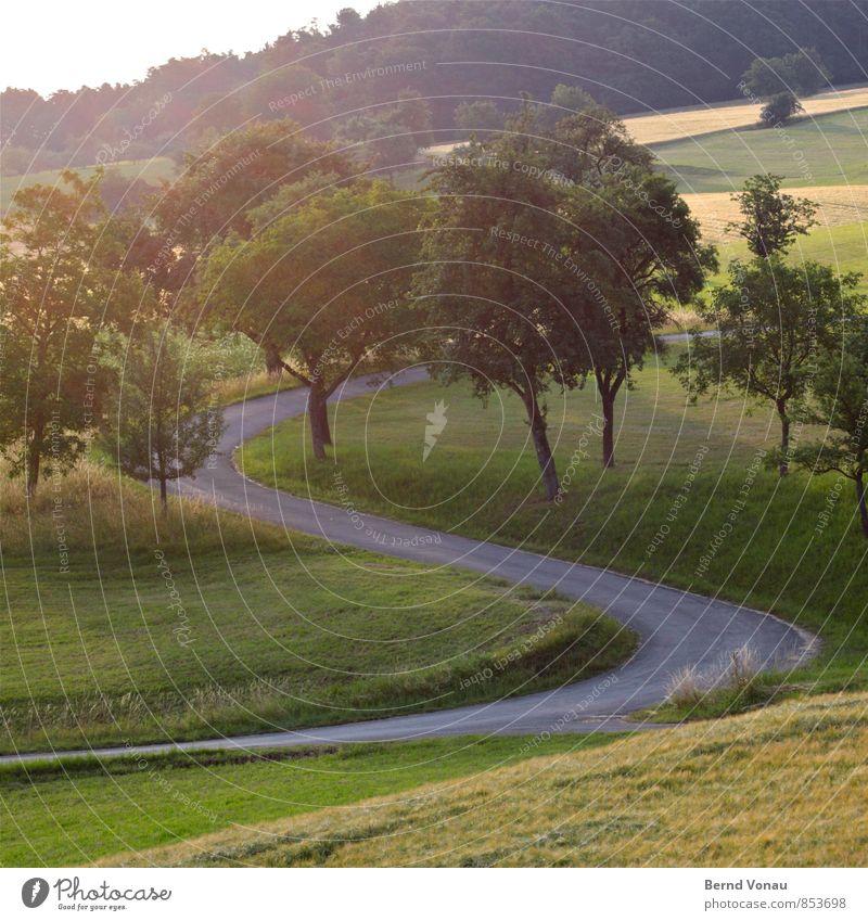 S Umwelt Landschaft Pflanze Baum Gras Wiese Feld Wald gelb grau grün Asphalt Kurve Straße geschwungen schwungvoll Sonnenlicht aufwärts Hügel Sommer schön