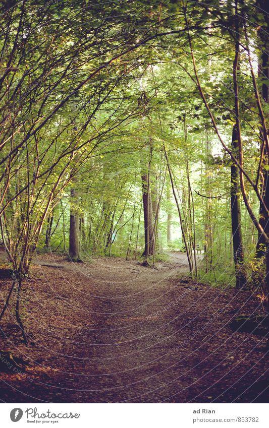 Outer (City) Space Natur schön Sommer Baum Erholung Landschaft Wald Gras Wege & Pfade natürlich Holz Horizont Park Freizeit & Hobby elegant Idylle