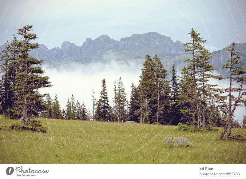 Skyline I Himmel Natur Ferien & Urlaub & Reisen Sommer Baum Landschaft Wolken Wald Berge u. Gebirge Gras natürlich Felsen Horizont Regen wild Nebel
