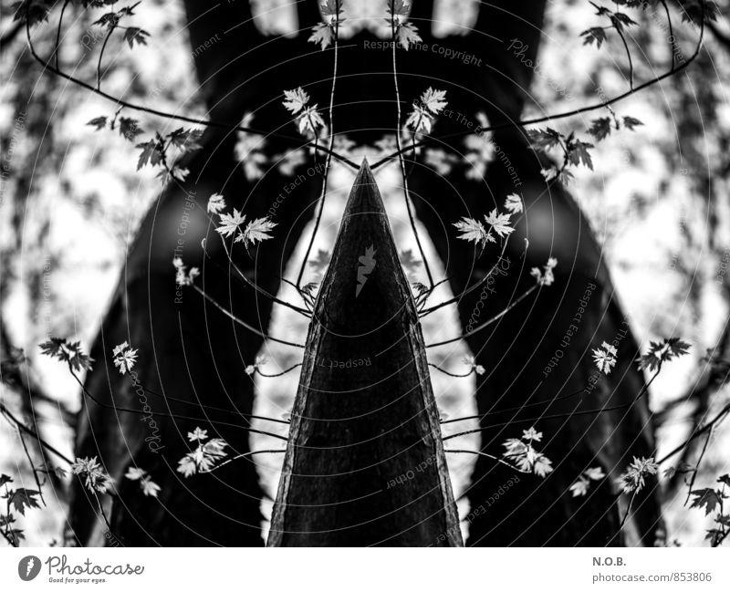 Patterns of Nature Pflanze Baum Blatt Frühling natürlich außergewöhnlich ästhetisch bedrohlich Kreativität einzigartig Symmetrie Interesse komplex