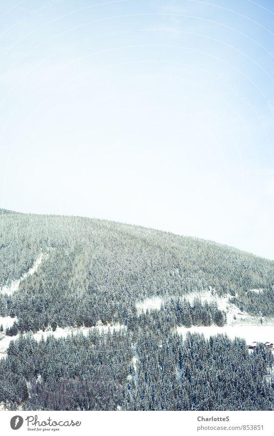 Waldspuren I blau Baum Landschaft Ferne Winter Wald Berge u. Gebirge Schnee Holz Freiheit oben Schneefall Eis wandern beobachten Schönes Wetter