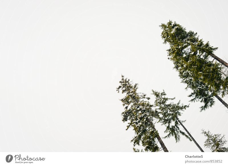 Die Oberen Natur grün Baum Landschaft Tier Wald Umwelt Schnee Holz oben Park Schneefall Eis Nebel Wachstum mehrere