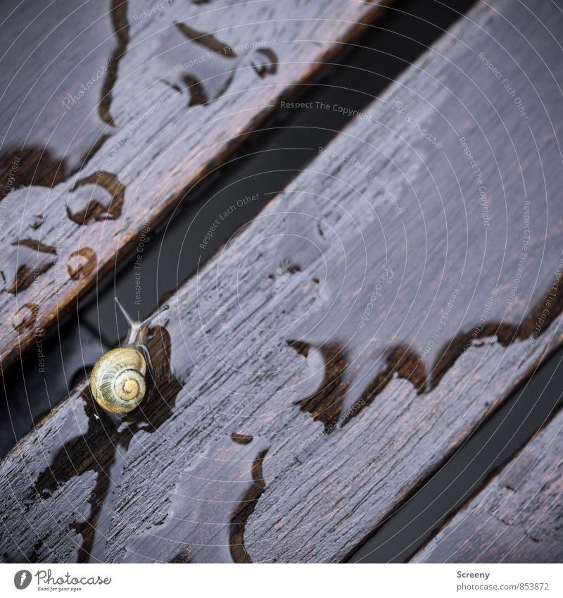 Bei Nässe Rutschgefahr! Natur Pflanze Wasser Sommer Tier gelb Tierjunges Herbst Frühling klein Holz braun Regen gefährlich nass Spuren
