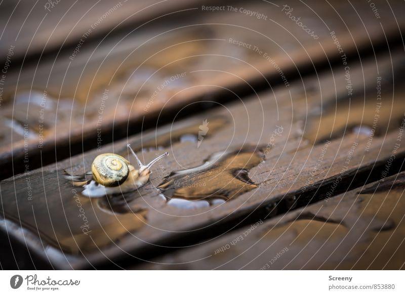 Auf trockenen Wegen... Natur Tier Wasser Frühling Sommer schlechtes Wetter Regen Schnecke 1 Tierjunges Holz klein nass braun gelb Geborgenheit Gelassenheit