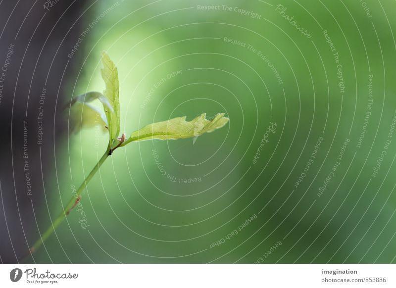 frischer Trieb Natur Tier Frühling Pflanze Baum Blatt Grünpflanze Wachstum Keim Farbfoto Außenaufnahme Nahaufnahme Detailaufnahme Makroaufnahme