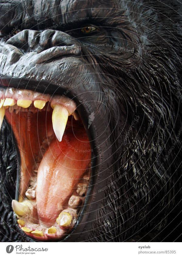 Skippy, das Buschkänguru Gorilla Rachen King Kong Affen Urwald Wildnis gefährlich Haustier schwarz Fell Afrika Zoo Wildpark Zirkus Manege Monster Säugetier Kino