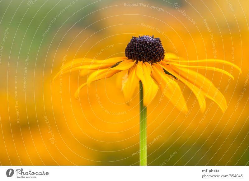 Yellow Natur Pflanze grün Sommer Blume gelb Grünpflanze