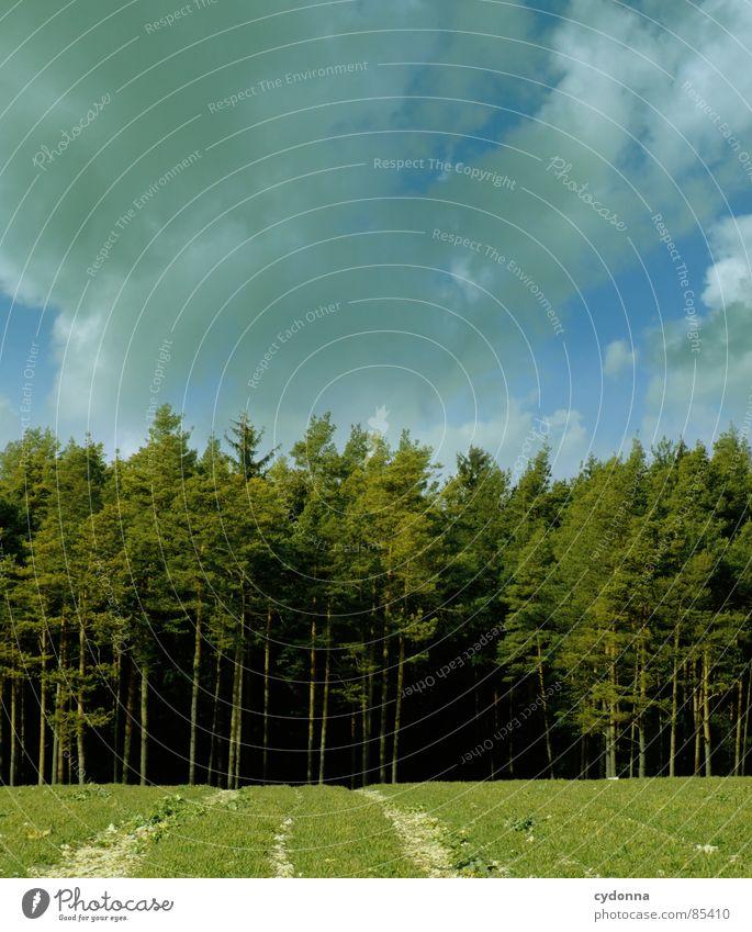 Am Waldrand stehn Himmel Natur grün schön Erholung Landschaft Wolken Freude Ferne dunkel Wald Wärme Leben Frühling Gefühle Wiese