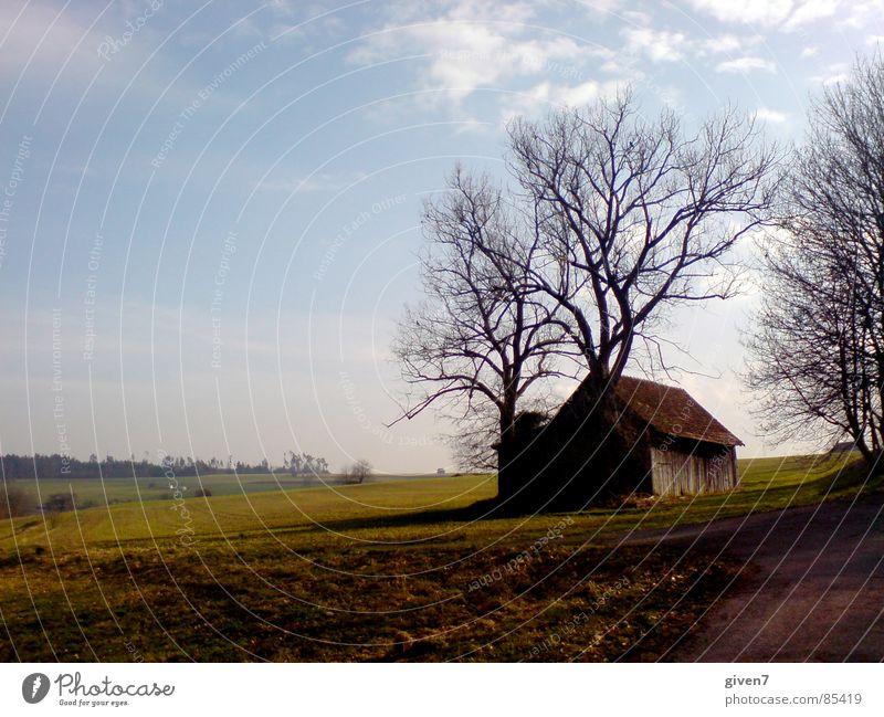 romantik schwarzwald Landschaft Feld Perspektive Romantik Schneelandschaft Blauer Himmel Schwarzwald