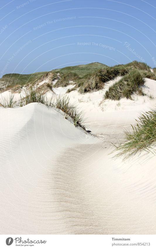 Ein Bild von einer Düne. Himmel Natur Ferien & Urlaub & Reisen blau Pflanze grün Landschaft ruhig Umwelt Gefühle natürlich Sand ästhetisch Schönes Wetter