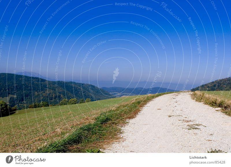 mein weg Himmel Wald Wiese Wege & Pfade Hügel Fußweg Schönes Wetter Österreich Blauer Himmel Nadelwald Waldwiese losgehen Zufahrtsstraße Österreicher