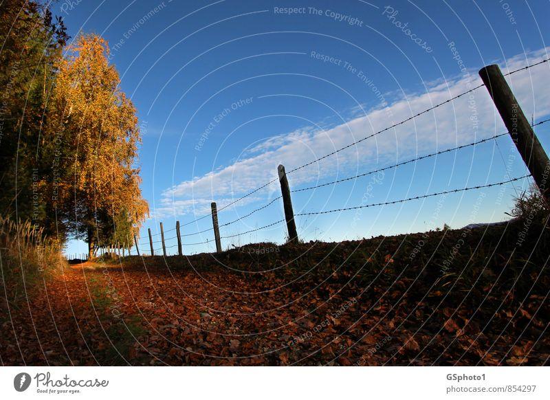 Herbstweg Natur Landschaft Himmel Sonnenlicht Schönes Wetter Baum Wald wandern blau braun mehrfarbig gelb rot Warmherzigkeit Idylle Herbstfärbung