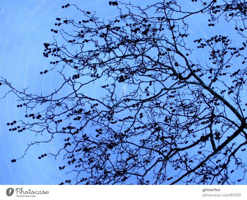 heaven in the sky Himmel Baum blau Winter ruhig Frühling Ast Fee karg