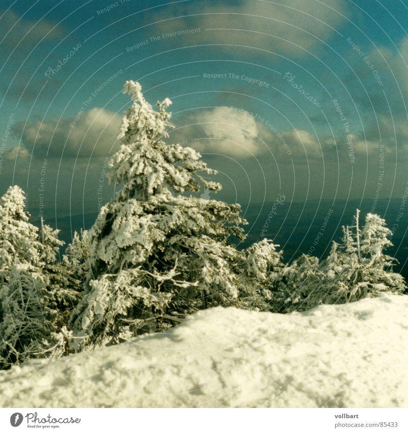 Brockensicht Winter Schnee Tanne Dezember Harz Bruchstück Winterlicht
