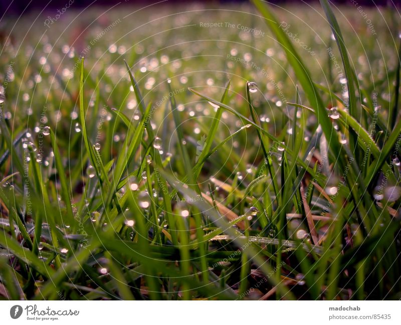LOVELY DRIPS glänzend Tau Gras Wiese grün nass feucht Romantik Natur Spielen Märchen Märchenlandschaft Tagtraum träumen Verhext schön Idylle Grasland Beet
