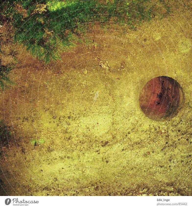 Multifunktionswand grün Pflanze Wand Gefühle Stein Mauer Sand dreckig Kreis Wachstum rund weich berühren verfallen Quadrat