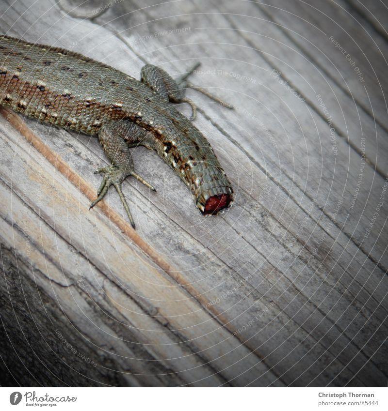 Schwanz ab! grün Tier Holz Beine Fuß braun verrückt gefährlich Wachstum Idee Lebewesen gruselig Gewalt Konflikt & Streit Holzbrett Seele