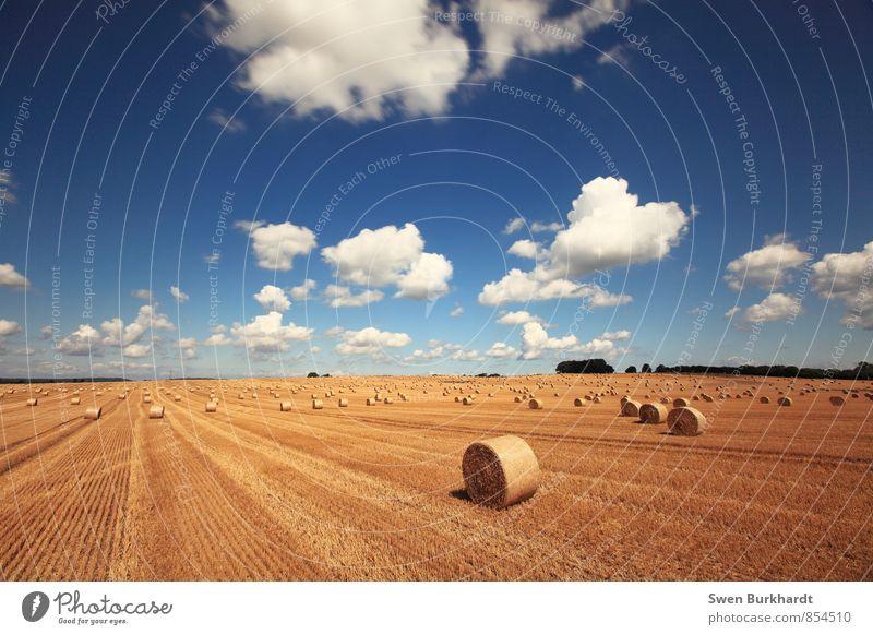Erntezeit auf der Insel Rügen Himmel Natur Ferien & Urlaub & Reisen blau Pflanze Sommer Erholung Landschaft ruhig Wolken Ferne Umwelt gelb Herbst Freiheit