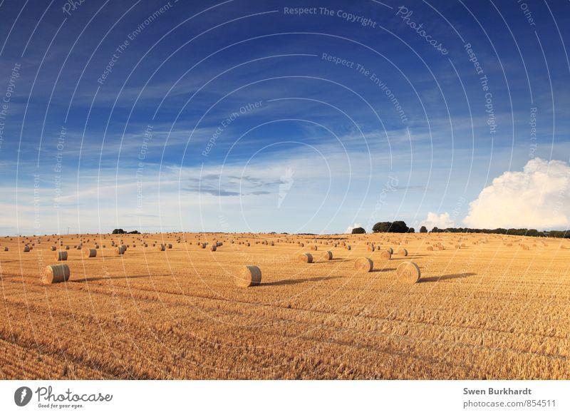 Weggefegt Himmel Natur Ferien & Urlaub & Reisen blau Pflanze Sommer Erholung Landschaft ruhig Wolken Ferne Umwelt gelb Herbst Horizont Luft