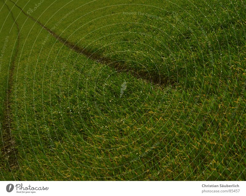 Follow the green 2 grün Wolken Wiese Gras Landschaft Luft Feld Rasen Weide Ackerbau Paradies Planet Auftrag Grünfläche