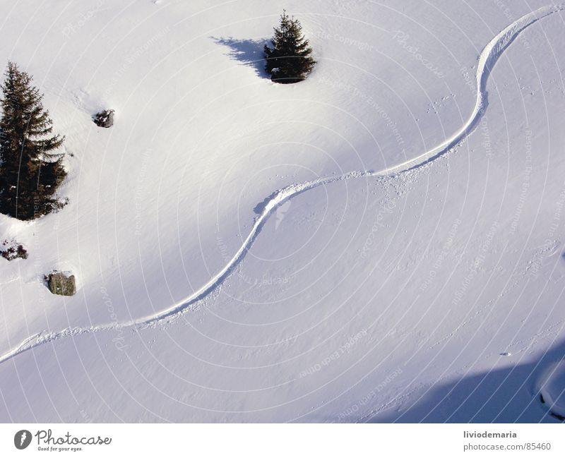 freerida Winter Schnee Sport Stein Freizeit & Hobby leer bedrohlich Jahreszeiten Baumstamm Bild Kurve Bogen abwärts Belichtung Skifahrer Wintersport