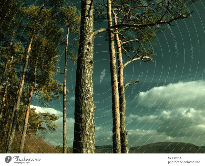 Da wo der Wald beginnt Himmel Natur grün schön Erholung Landschaft Wolken Freude Ferne dunkel Wald Berge u. Gebirge Wärme Leben Gefühle Freiheit