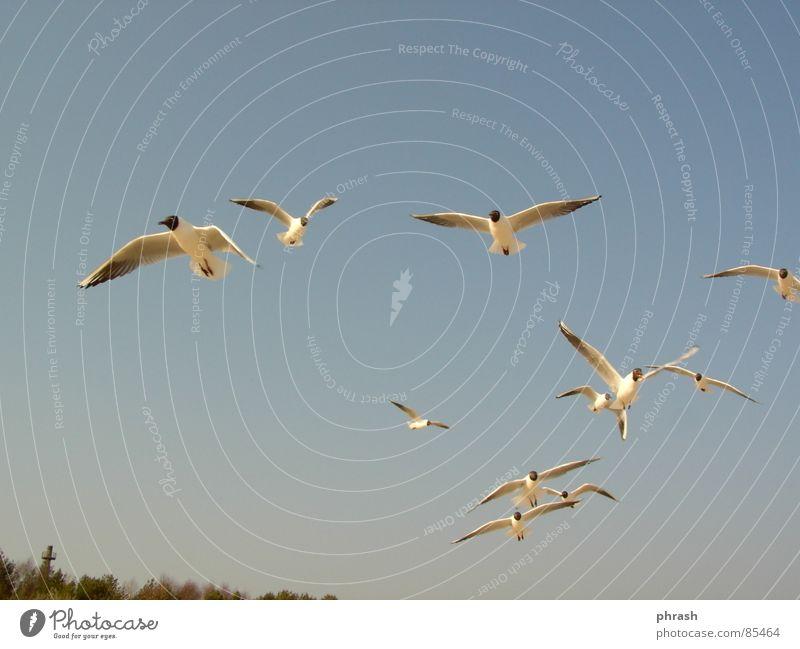 möwen Swinemünde Tier Vogel Himmel polnische ostsee möven Ostsee Polen Freiheit Firmament Himmelszelt