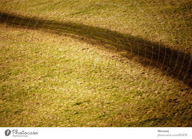 feldweg grün Einsamkeit Wiese Gras Wege & Pfade Feld Bodenbelag Boden Rasen Spuren Weide Landwirtschaft Fußweg Amerika Ackerbau Teppich