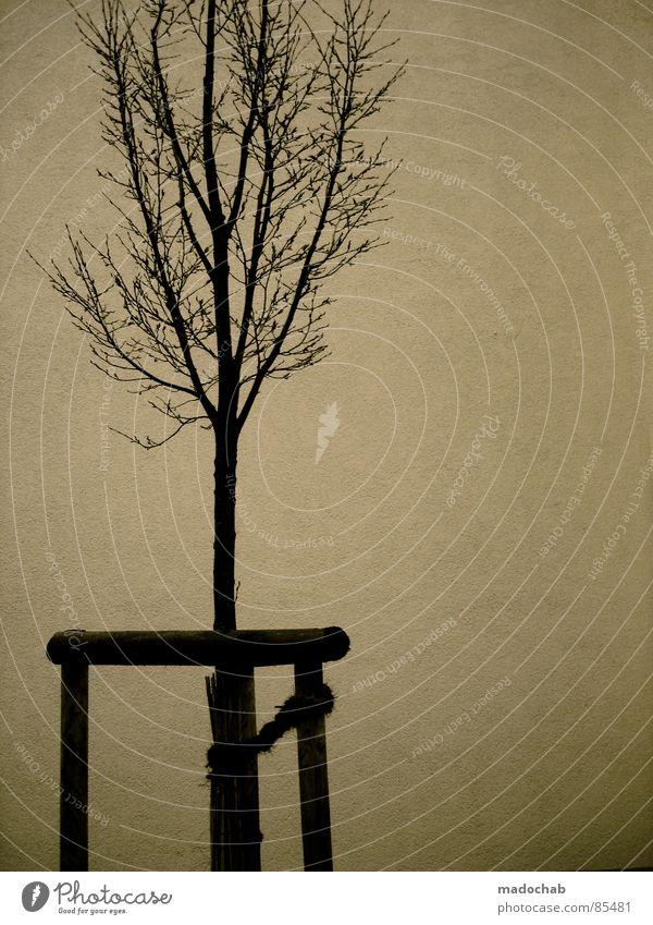ISOLATION | SUCHT Natur Einsamkeit Wand Holz Freiheit Mauer Traurigkeit offen trist Suche Stoff Trauer einfach Baumstamm Zweig Rauschmittel