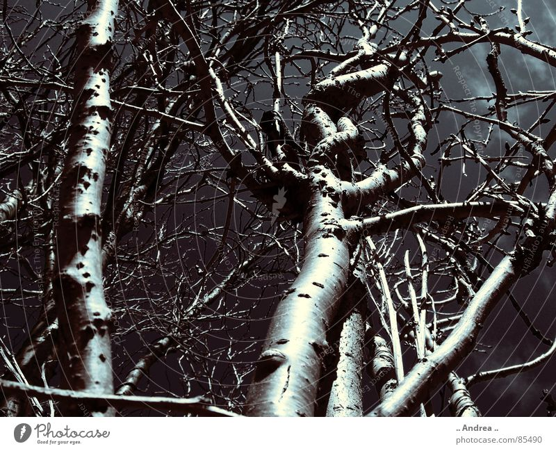verhexter Wald Himmel Baum Wolken schwarz dunkel Ast Baumstamm Unwetter Gewitter Wurzel schlechtes Wetter