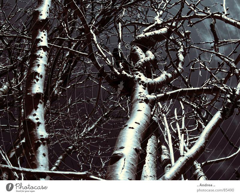 verhexter Wald Himmel Wolken schlechtes Wetter Unwetter Gewitter Baum dunkel schwarz Baumstamm Wurzel Ast Schwarzweißfoto