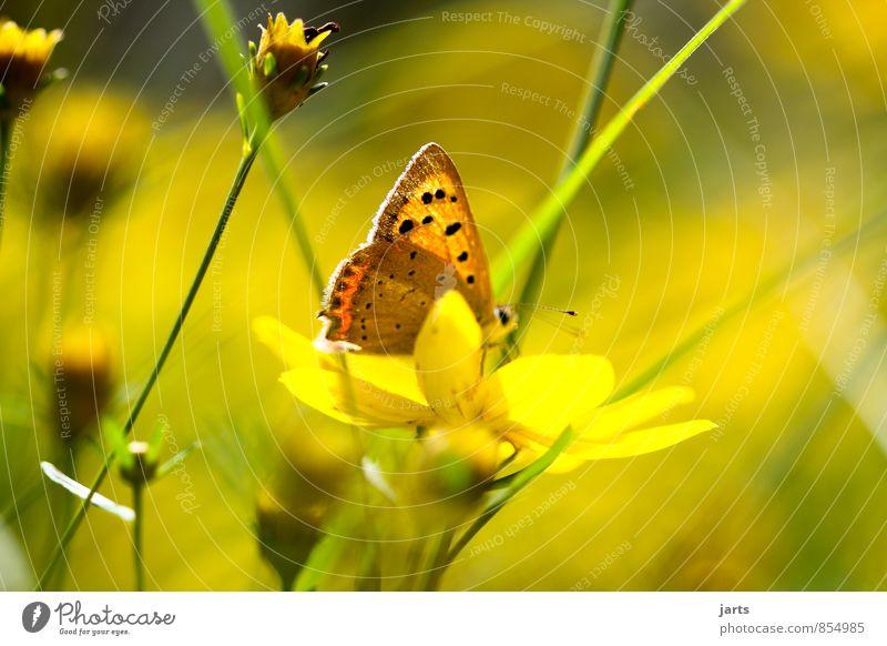 sommer erinnerungen Natur Pflanze Tier Sommer Schönes Wetter Blume Gras Garten Wildtier Schmetterling 1 einfach natürlich schön Gelassenheit ruhig Farbfoto