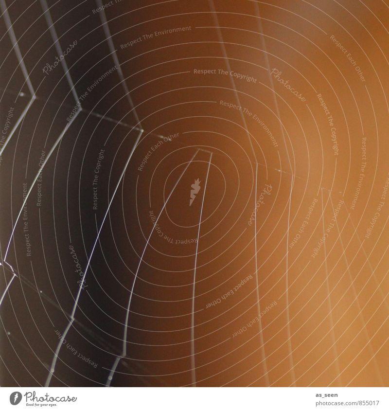 Altweibersommer Spinne Spinnennetz spinnen Insekt Netzwerk berühren glänzend hängen ästhetisch gruselig nass braun schwarz schön authentisch bizarr Natur Umwelt